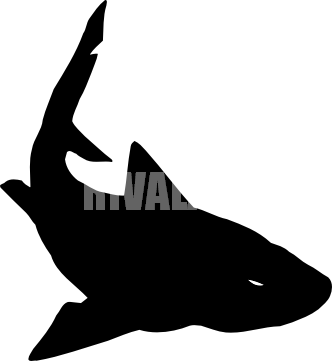 Shark Silhouette Png Tiger Shark Clip Art Ar5 Shark 05