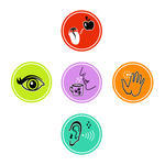 The Human Brain Vector Icon Set Of Five Human Senses