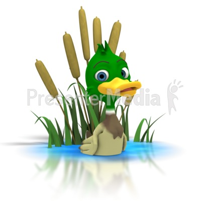 Mallard Duck Sitting In Pond   Wildlife And Nature   Great Clipart For