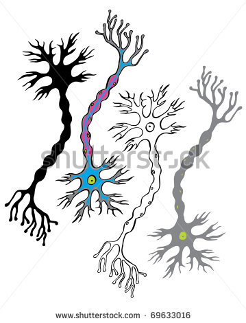 Nervous System Clipart Of The Nervous System