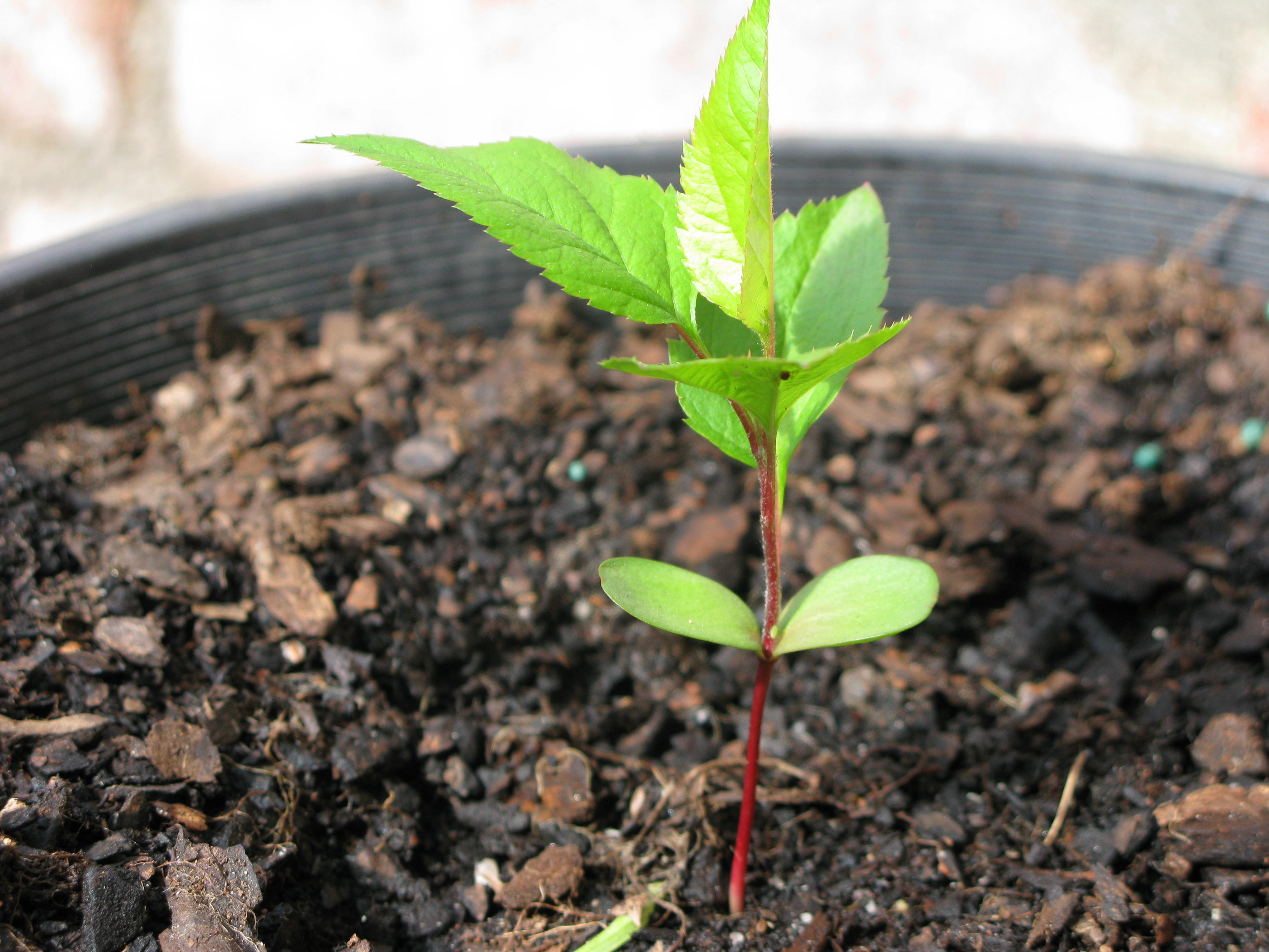 Apple Tree Seedling Clipart - Clipart Kid