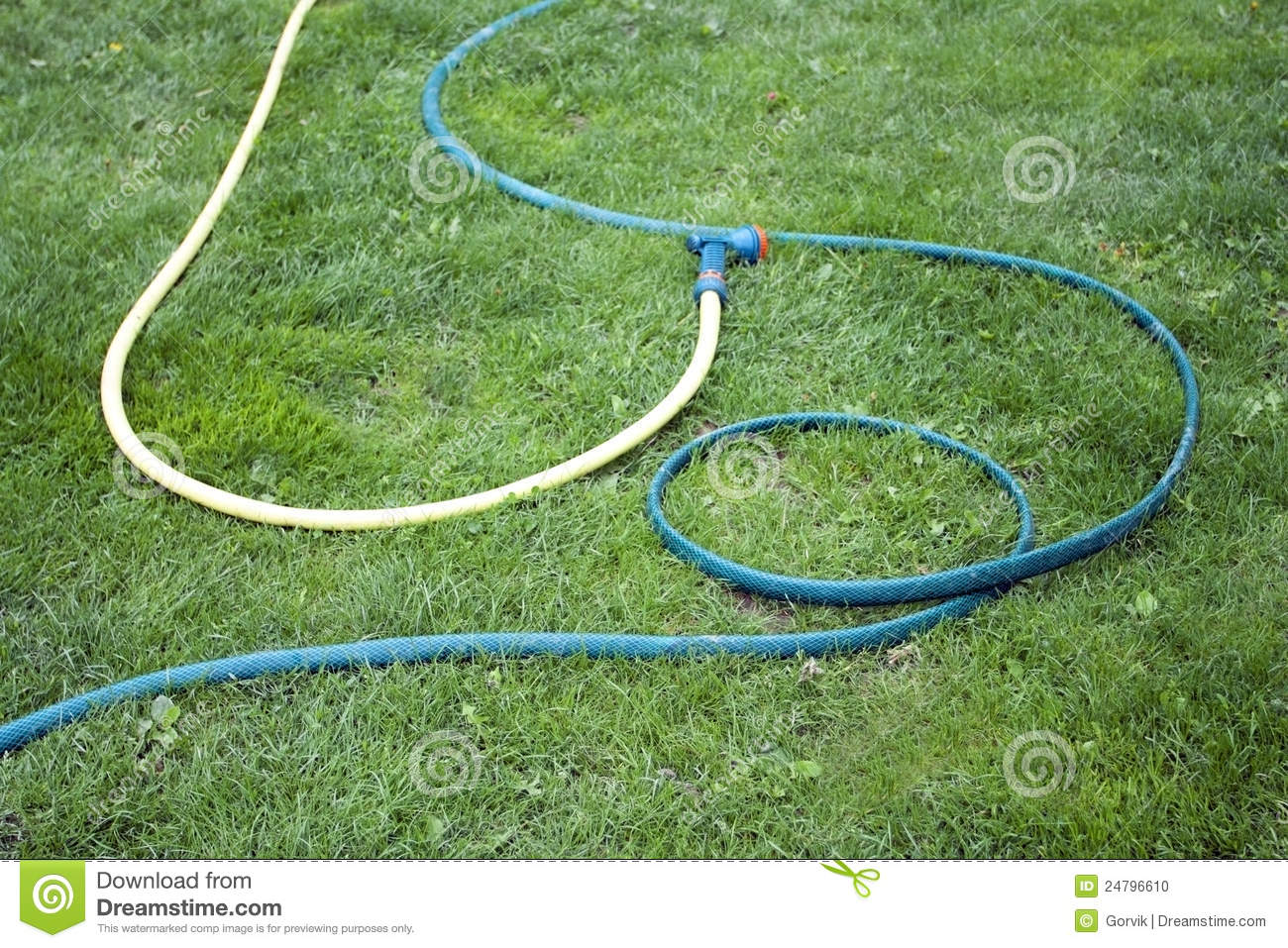 Hose For Watering Of Lawn Water Stock Photo   Image  24796610