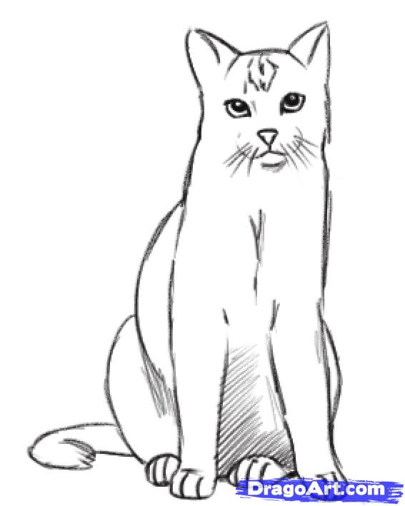 How To Draw A Real Cat Step By Step