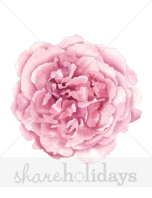 Peony Clipart   Item 5   Vector Magz   Free Download Vector Graphics