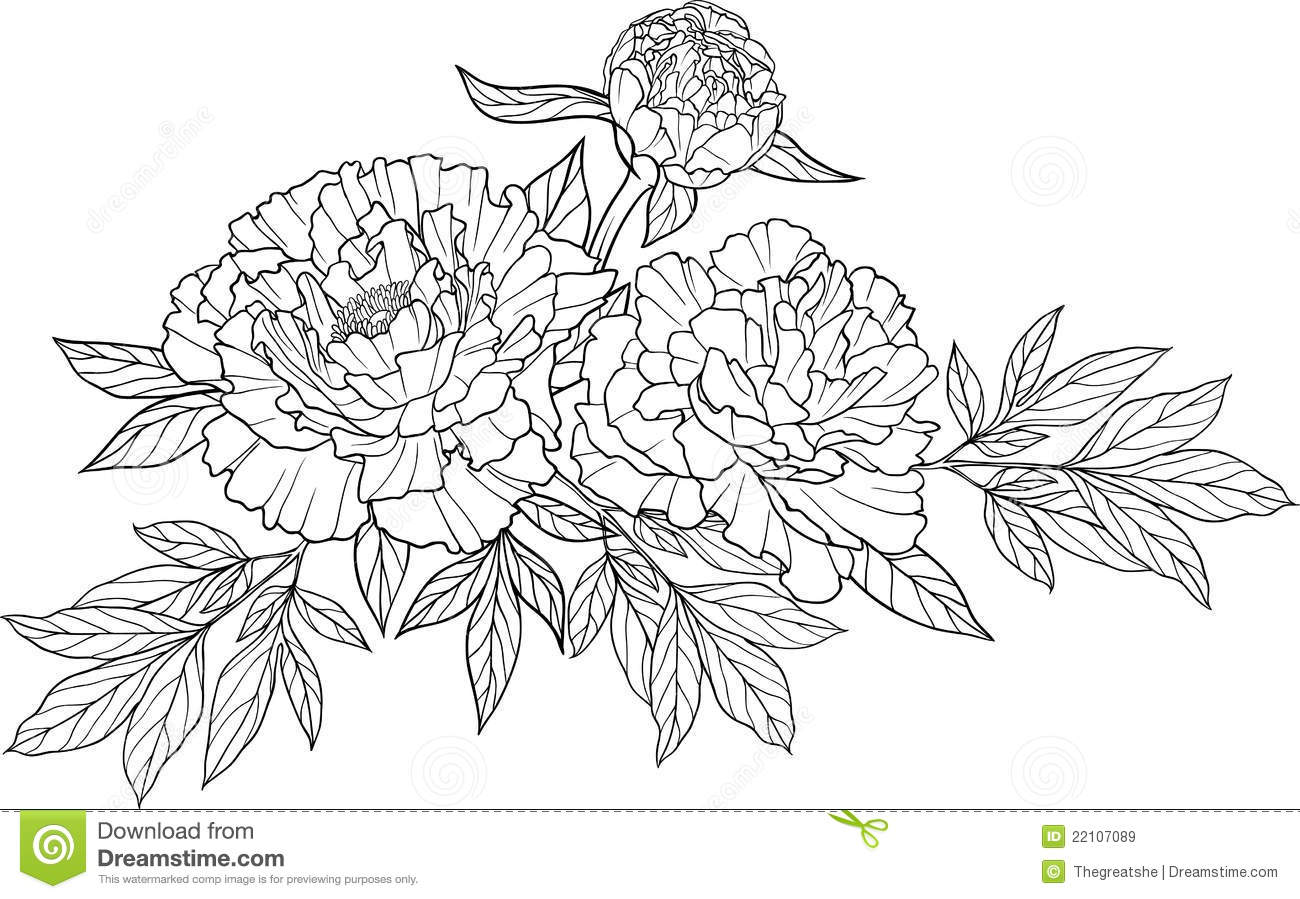 Realistic Graphic Three Peony Flower Tattoo Image With Leaves  Cool