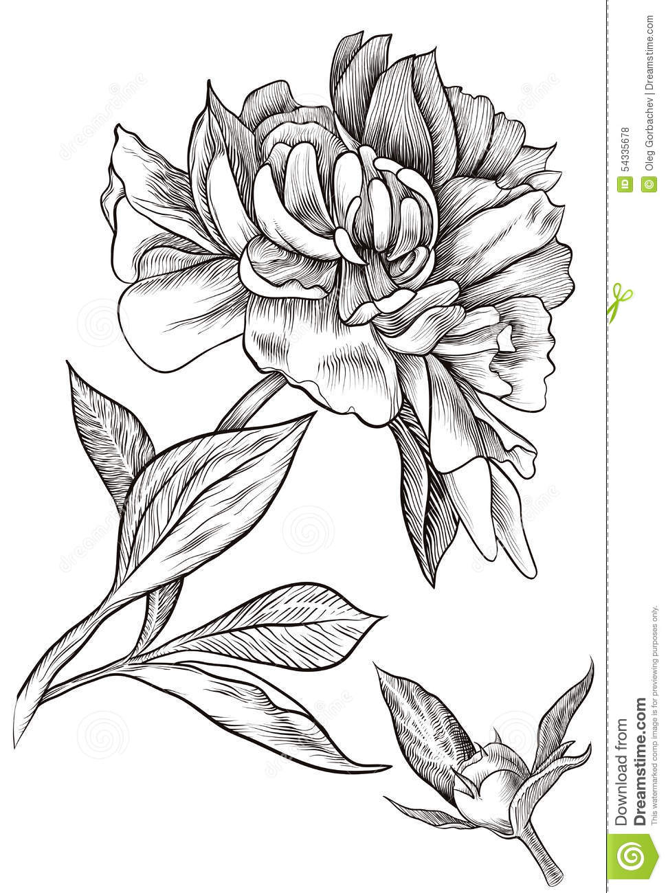 Vector Illustration  Design Element  Outline Drawing Of A Flower