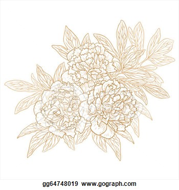 Vector Set Of Peonies In Vintage Engraving Style   Clipart Gg64748019