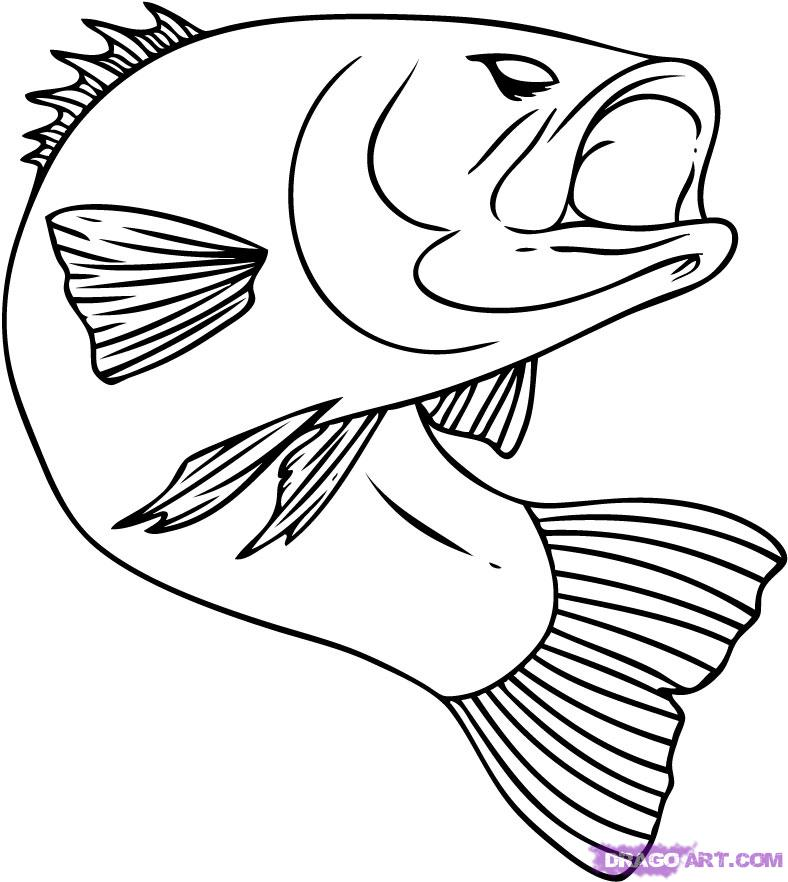 Bass Fish Coloring Pages How To Draw A Bass Step 6 1 000000015057 5
