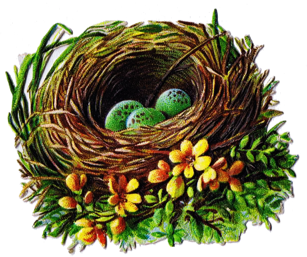 Bird Nest And Egg Graphics   5 Antique Die Cut Images   Knick Of Time
