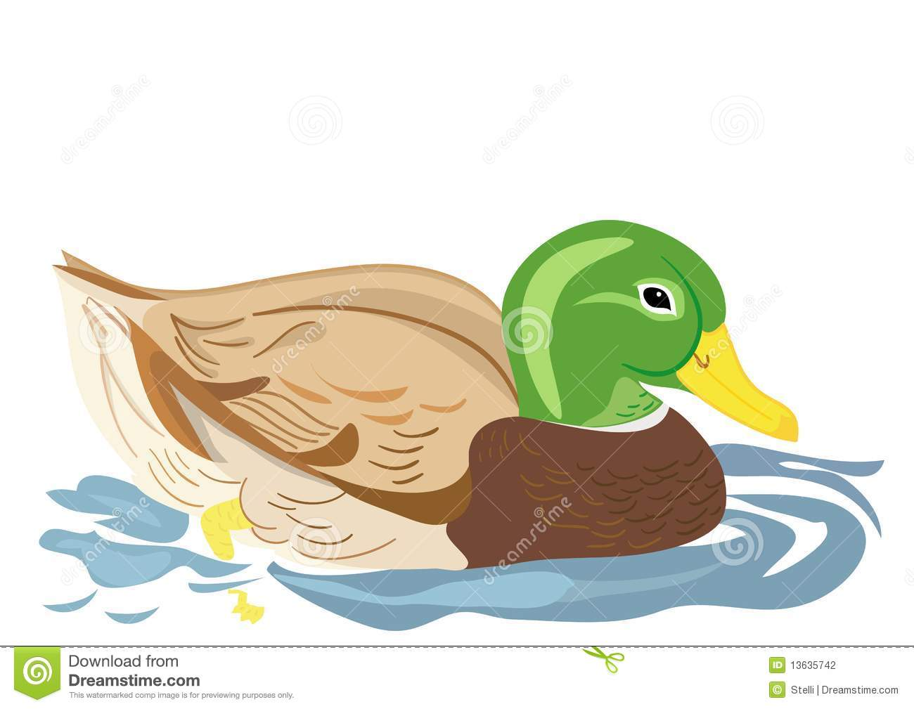 Duck Swimming In Pond Stock Photography   Image  13635742