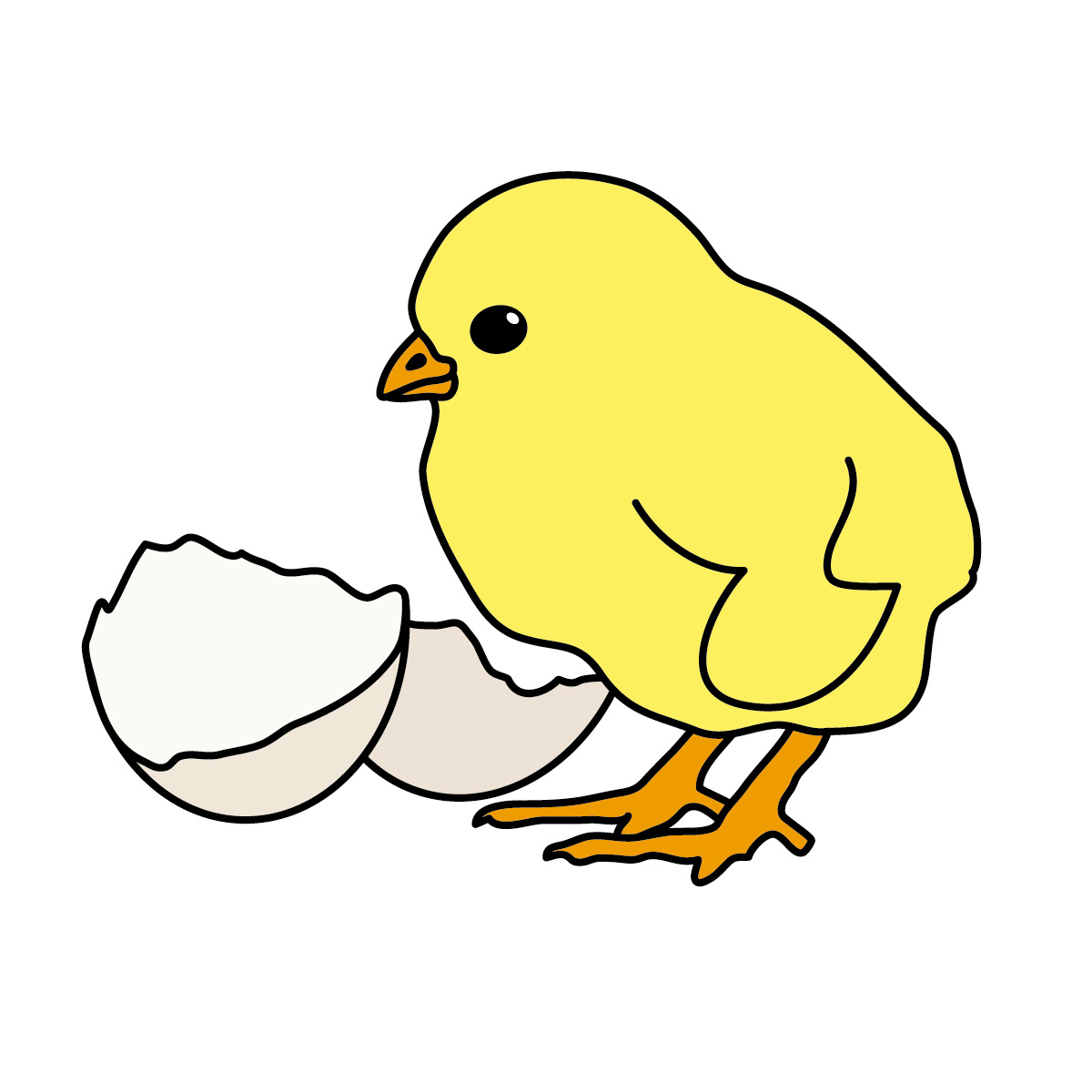 Baby chickens clipart - photo#14