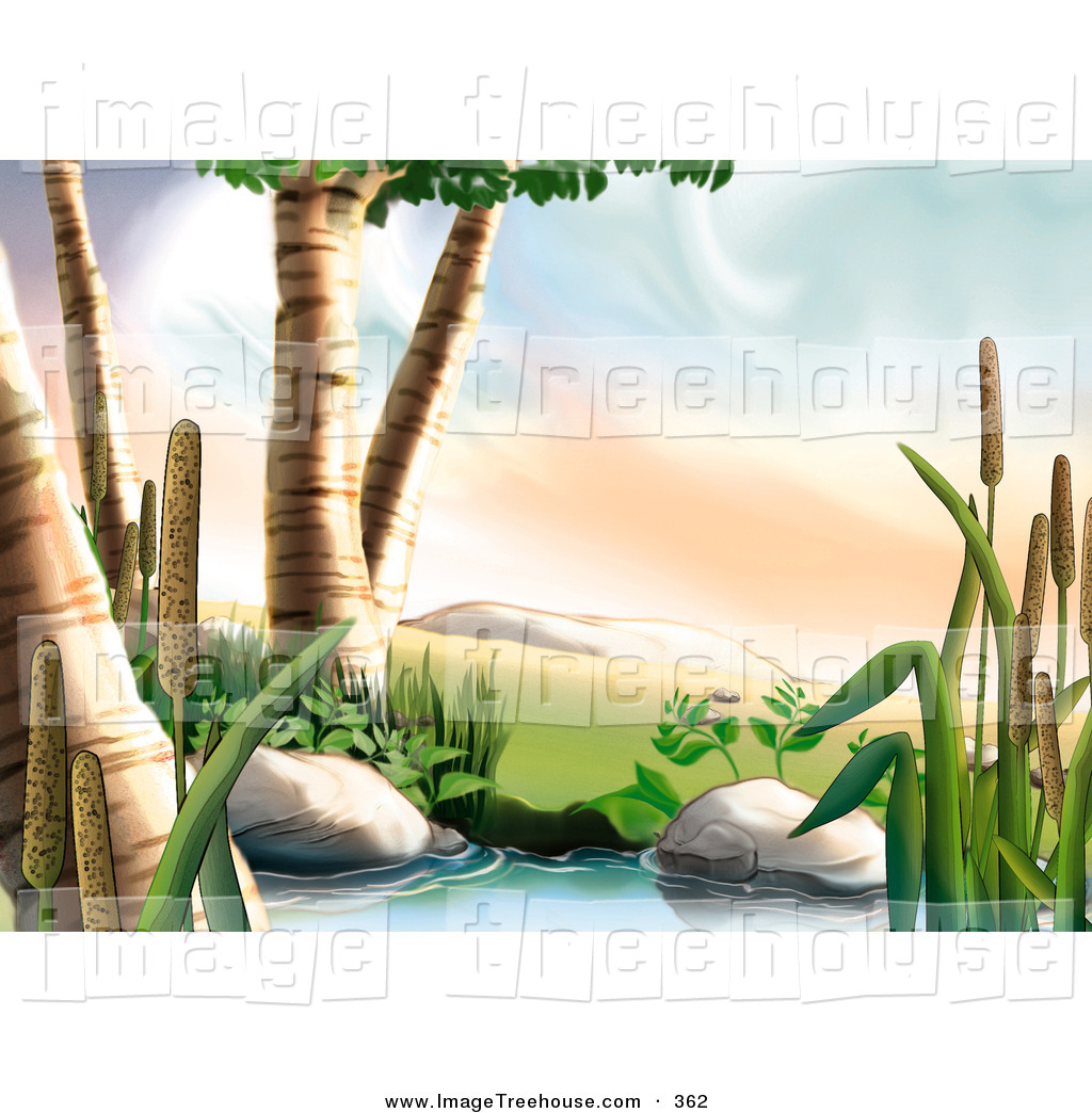 Clipart Of Birch Trees And Cattail Plants Next To A Creek By Dero