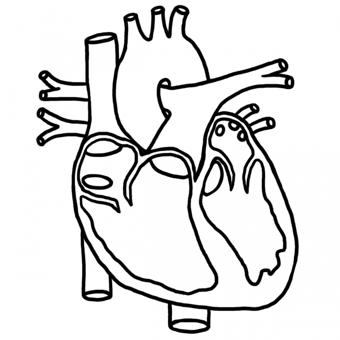 Human Heart Black And White Clipart - Clipart Kid