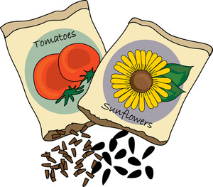 Image result for clipart seeds