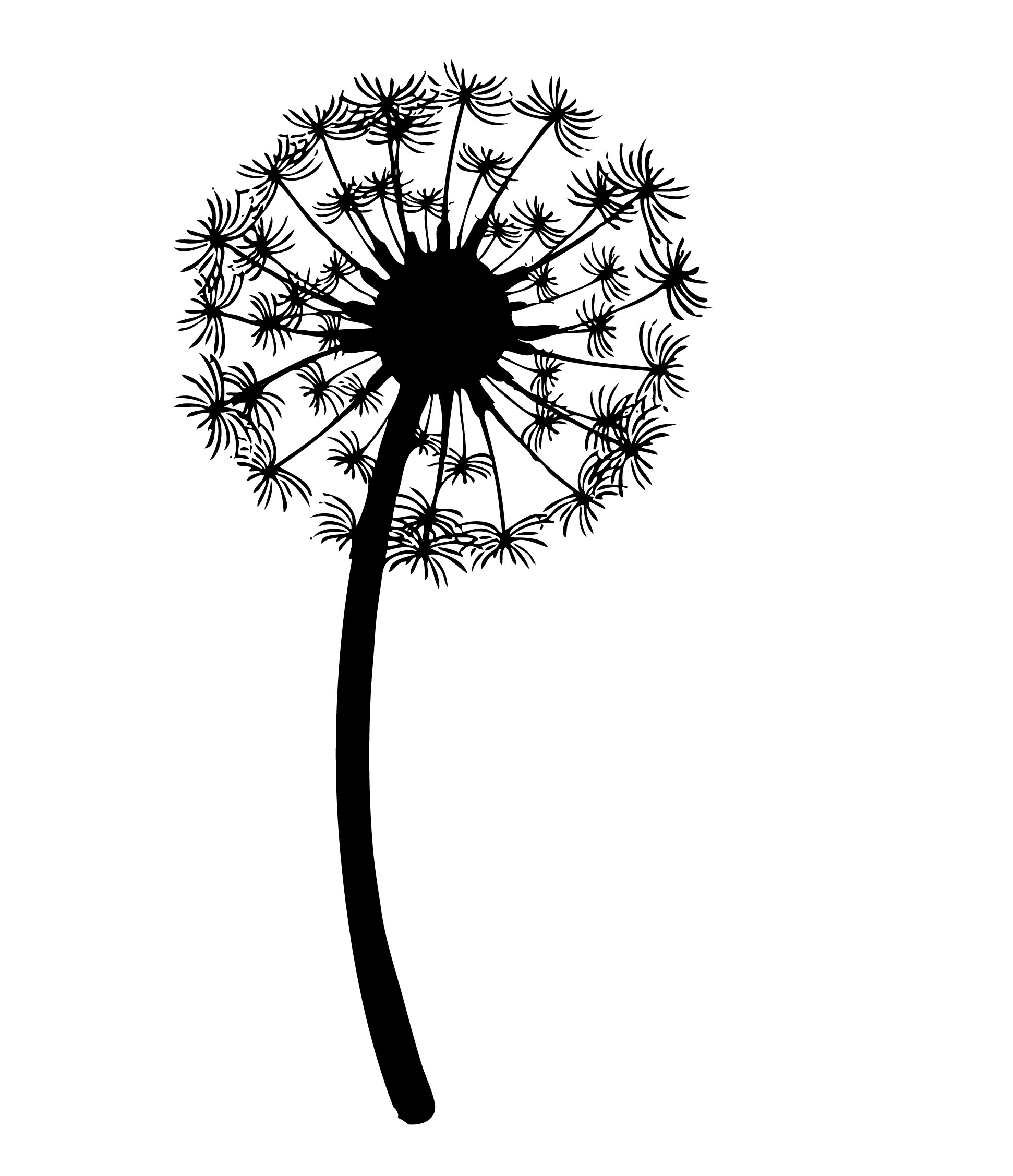 Dandelion Outline Clipart - Clipart Kid
