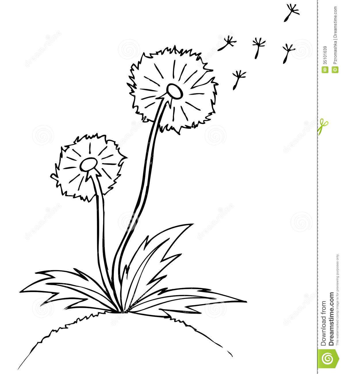 dandelion outline clipart  clipart suggest