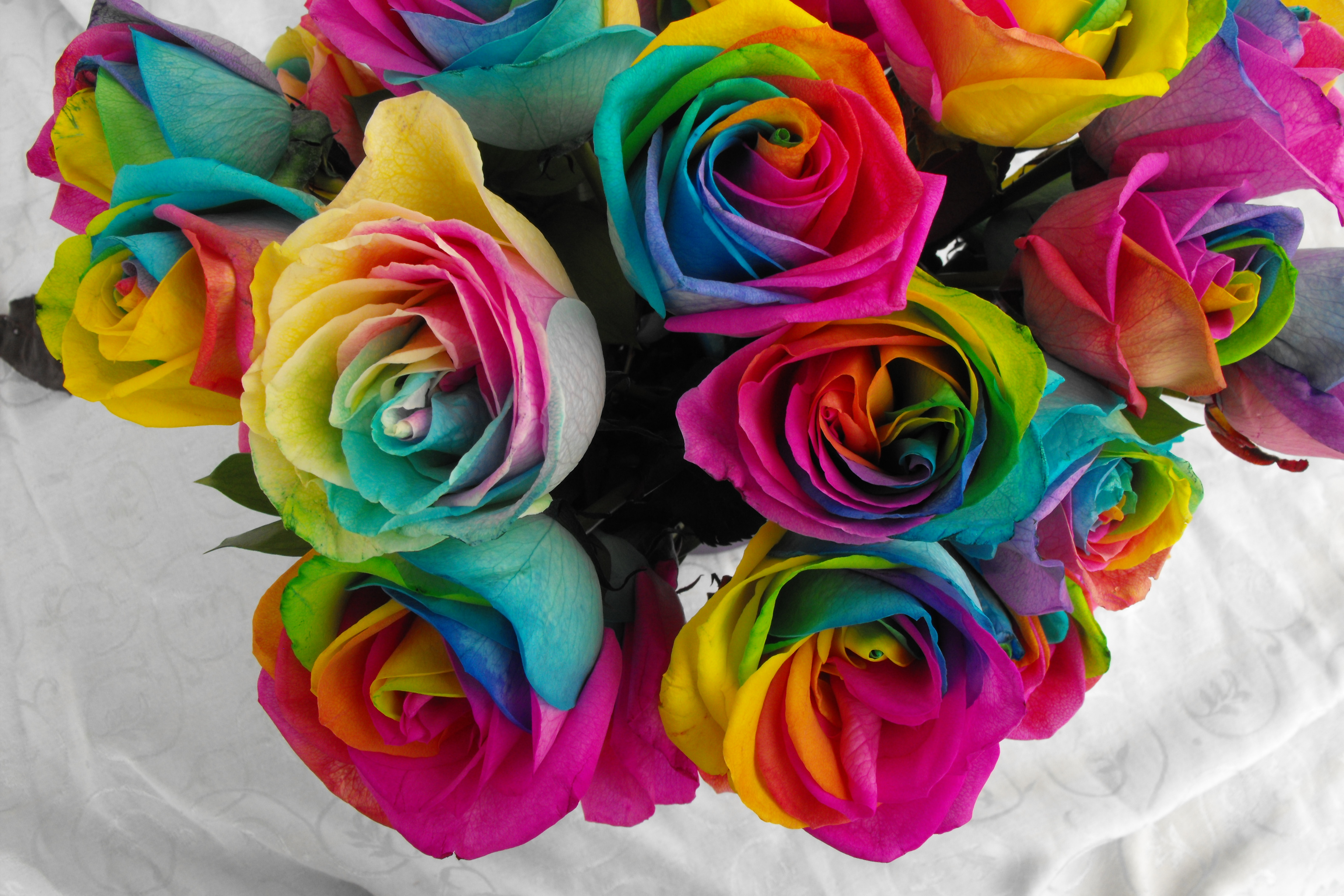 Rainbow roses background image gallery hoidj2 clipart for How much are rainbow roses