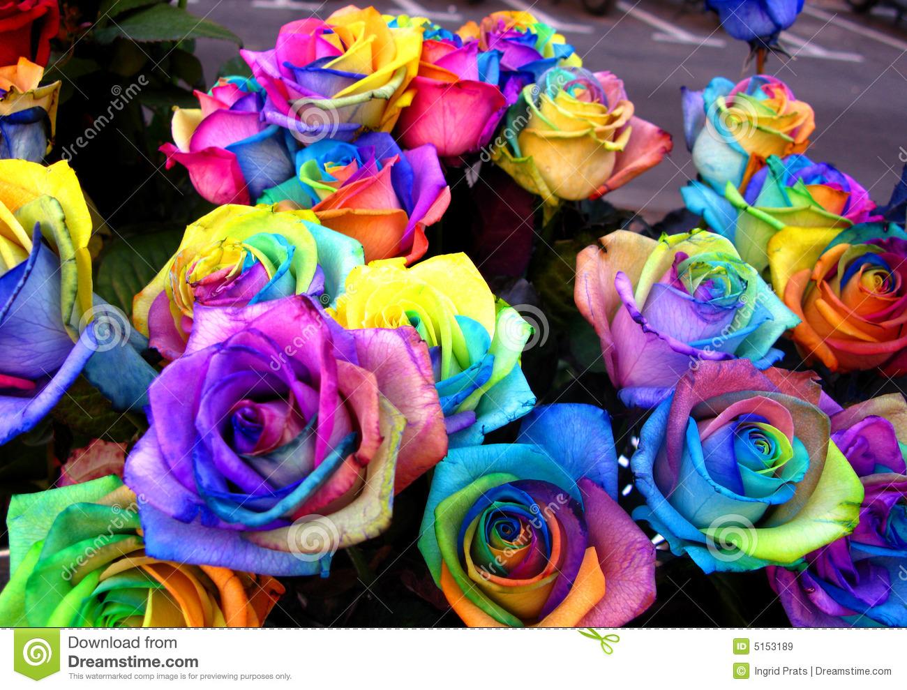 Pretty rainbow roses