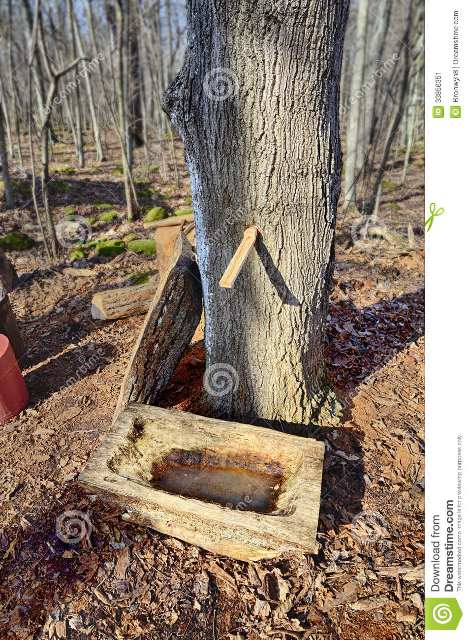 Maple Sugaring Stock Image   Image  33856351