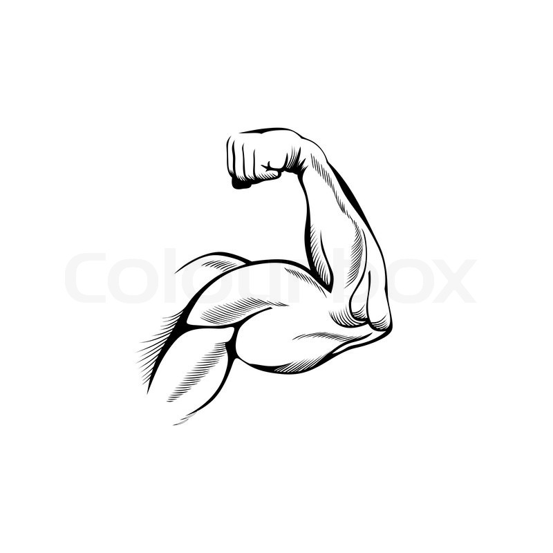 Stock Vector Of  Arm Muscles