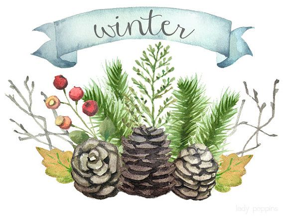 Watercolor Winter Clip Art   Pine Branches Cones Berries Leaves
