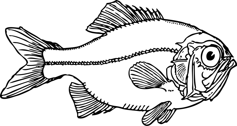 Fish Cod Head And Shoulders Food Clipart Pictures Png 82 11 Kb Fish