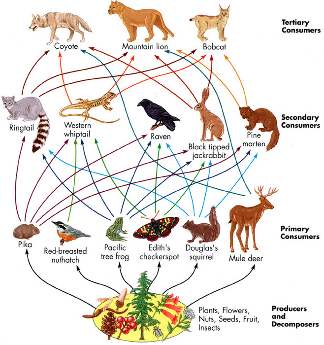 Grassland Food Webs And Food Chains   Publish With Glogster
