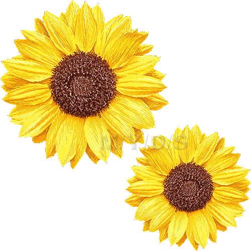 Sunflower Clipart - Clipart Kid