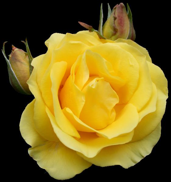 Yellow Rose Clip Art Free