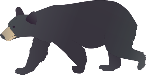 Black Bear Drawing   Clipart Best