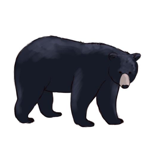 Clip Art Black Bear Clipart black bear clipart kid outline best