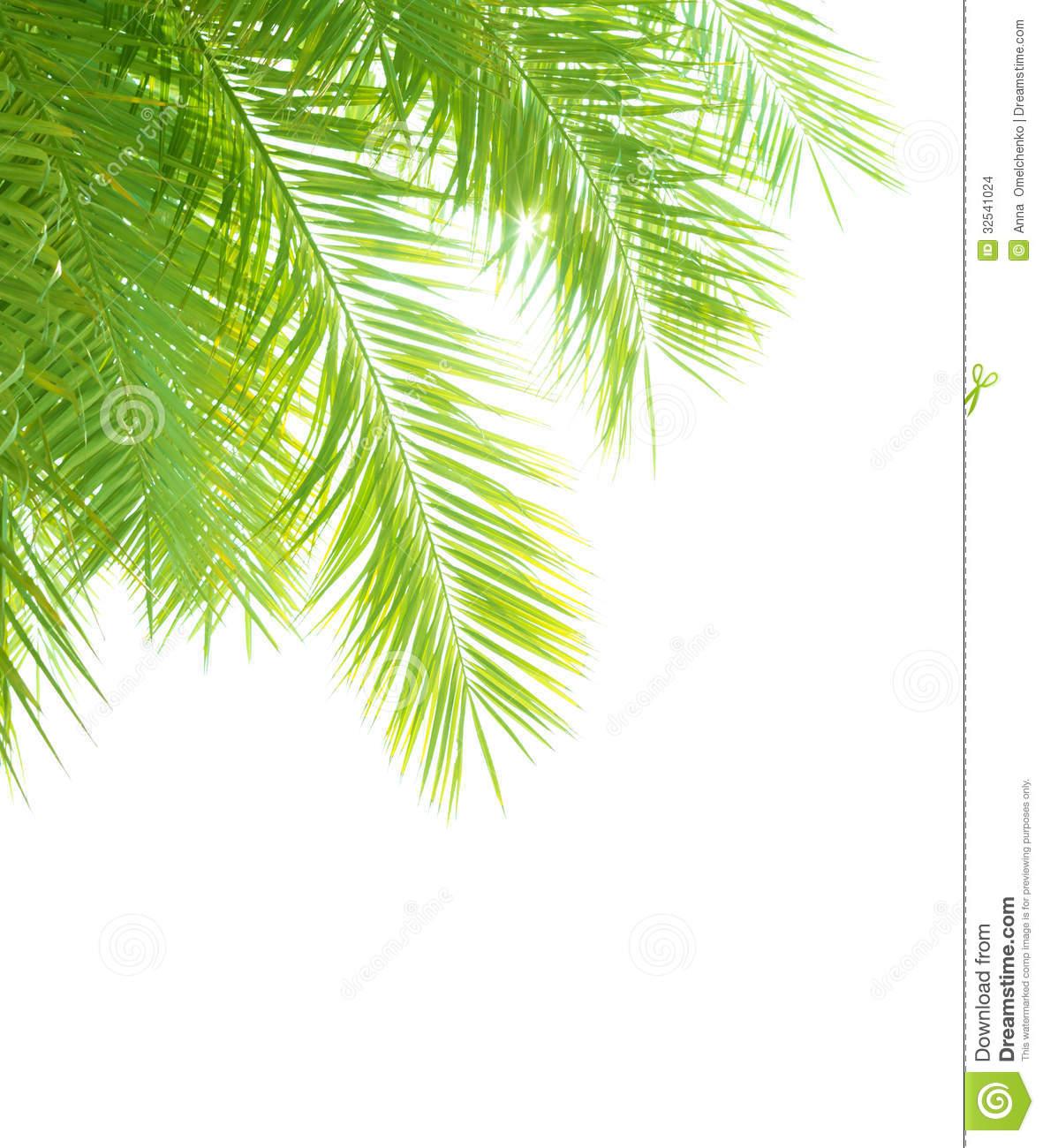 Tropical Palm Tree Border Clip Art – Cliparts