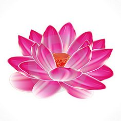 Water Lily Tatto   I Want This As A Tattoo  Just Like This Outlined In