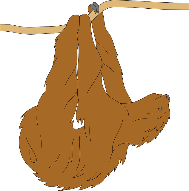 Free Sloth Hanging On A Tree Branch Clip Art