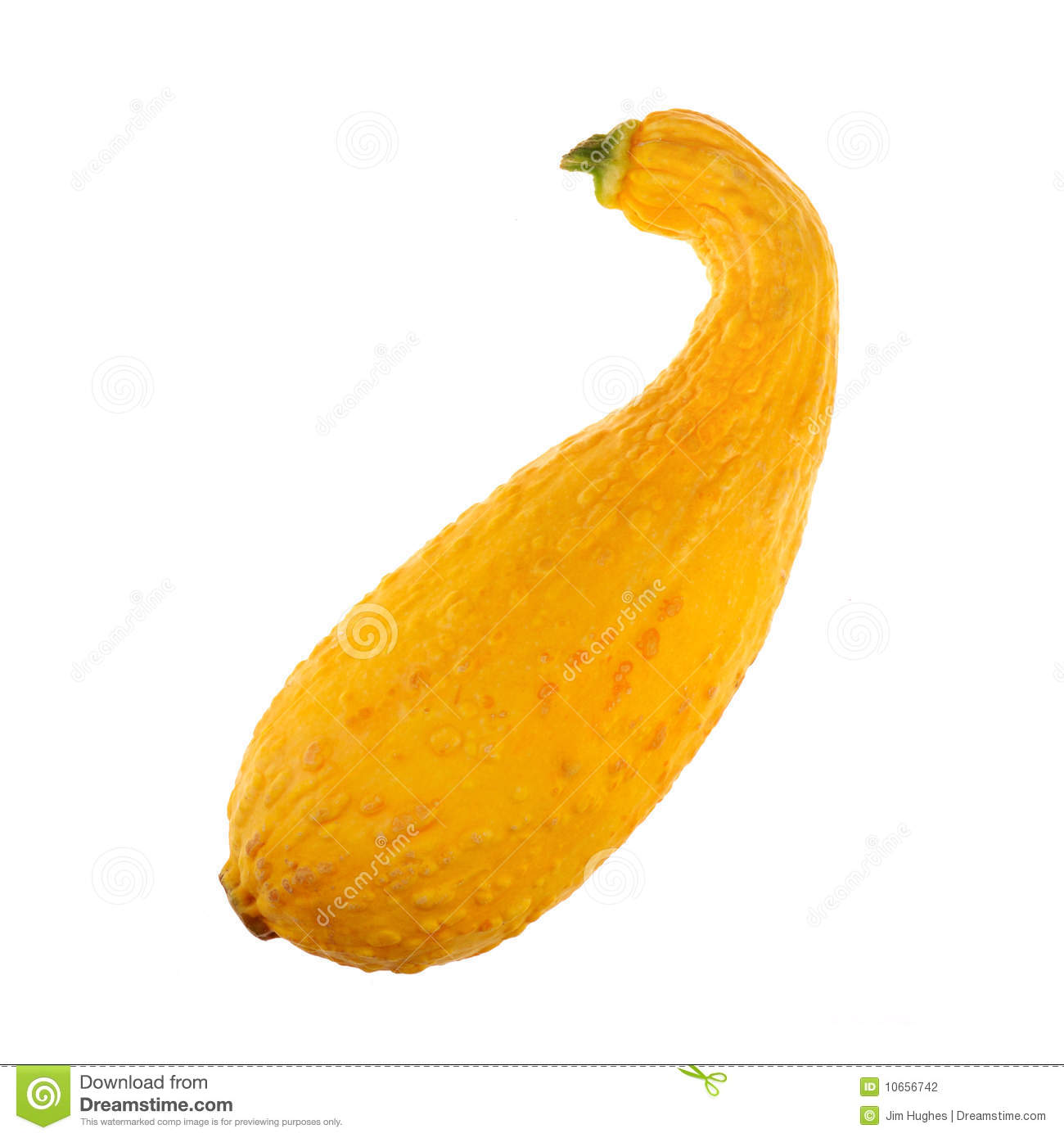 Yellow Squash Summer On White Clipart