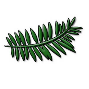 Description  This Is A Free Clipart Picture Of A Fern Leaf  This Image