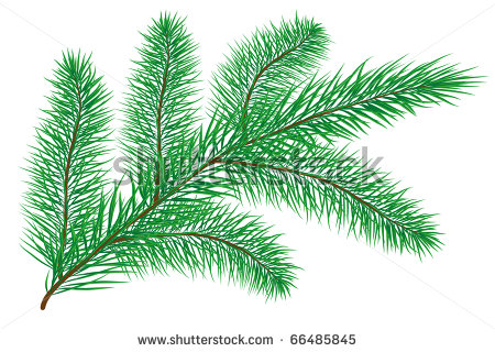 Pine Branch Isolated On White Vector Illustration   Stock Vector