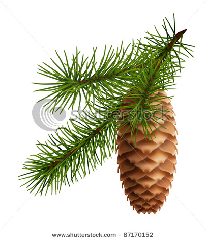 Pine Cone With Branch Vector Clip Art Picture