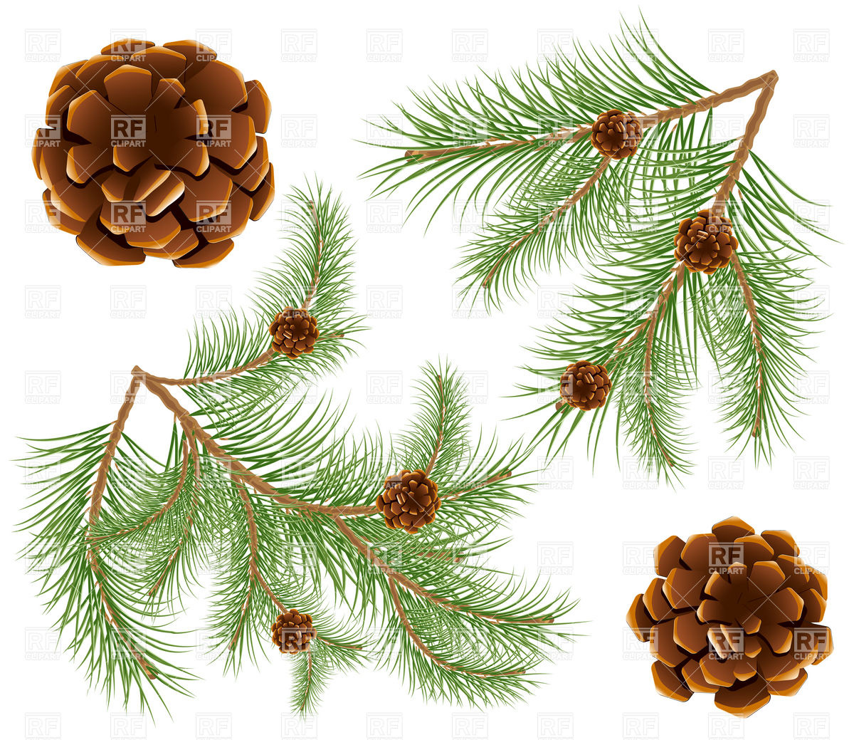 Pine Cones With Pine Needles Twig 5183 Plants And Animals Download