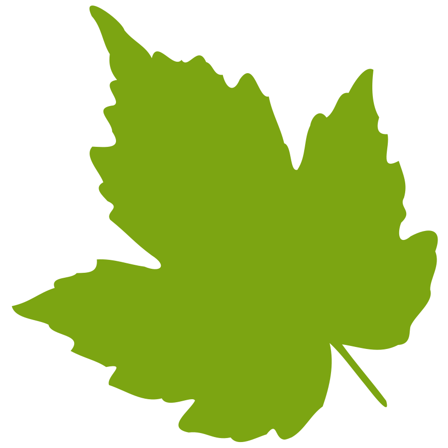 Oak Leaves Clip Art Birch Clipart Feuille Leaf 04 Vector Clipart Png