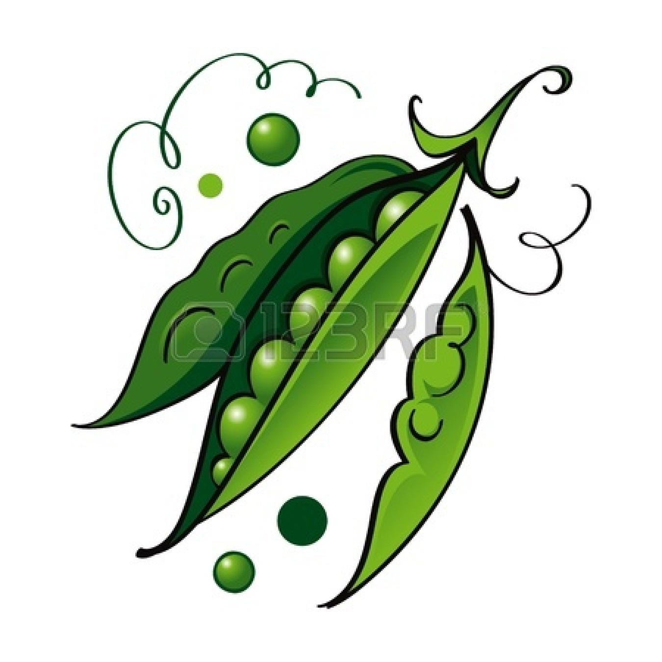 Sweet pea vine drawing