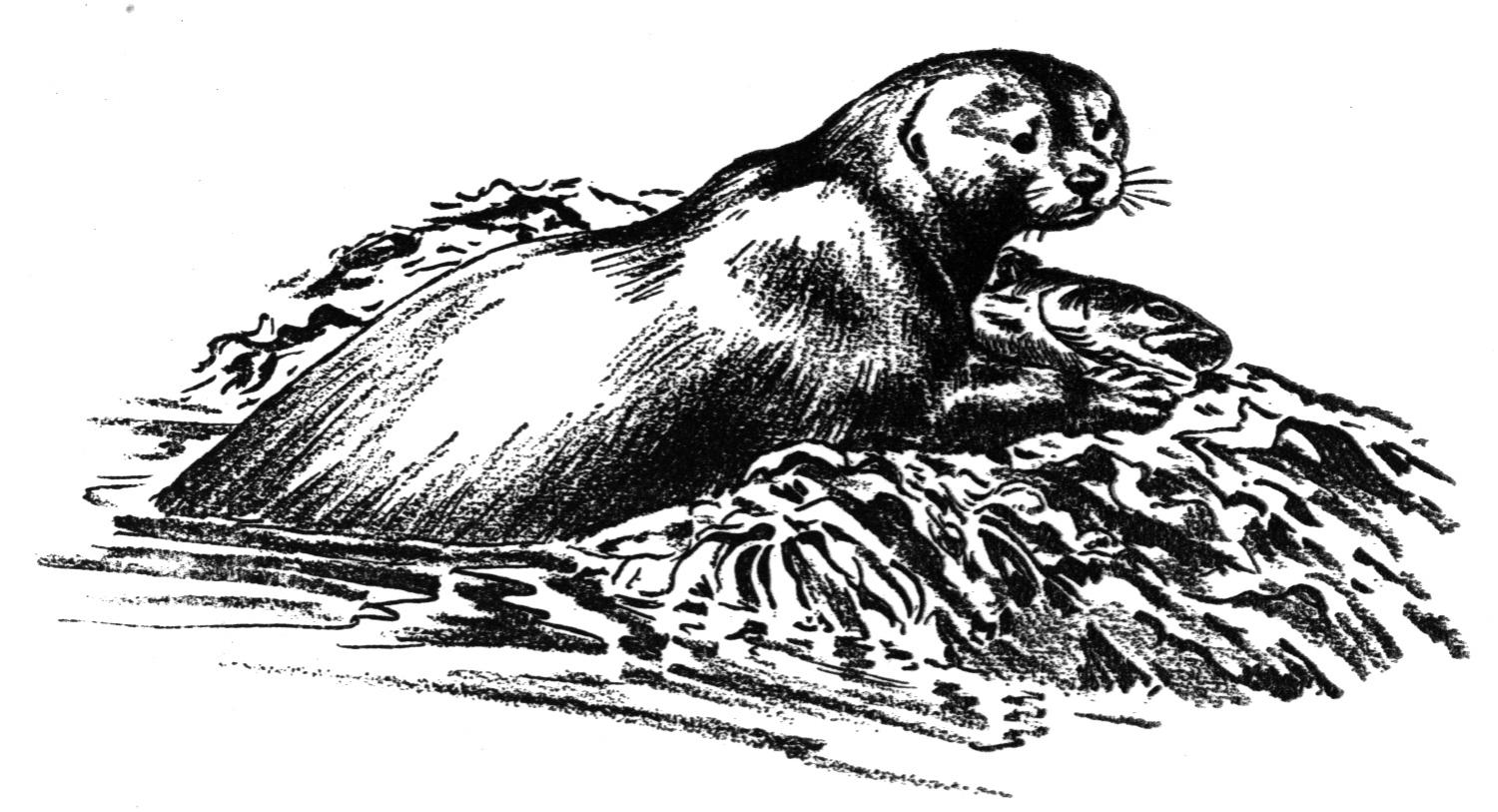 River Otter Clipart Otter In River