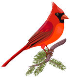 Showing Gallery For Christmas Cardinal Clipart