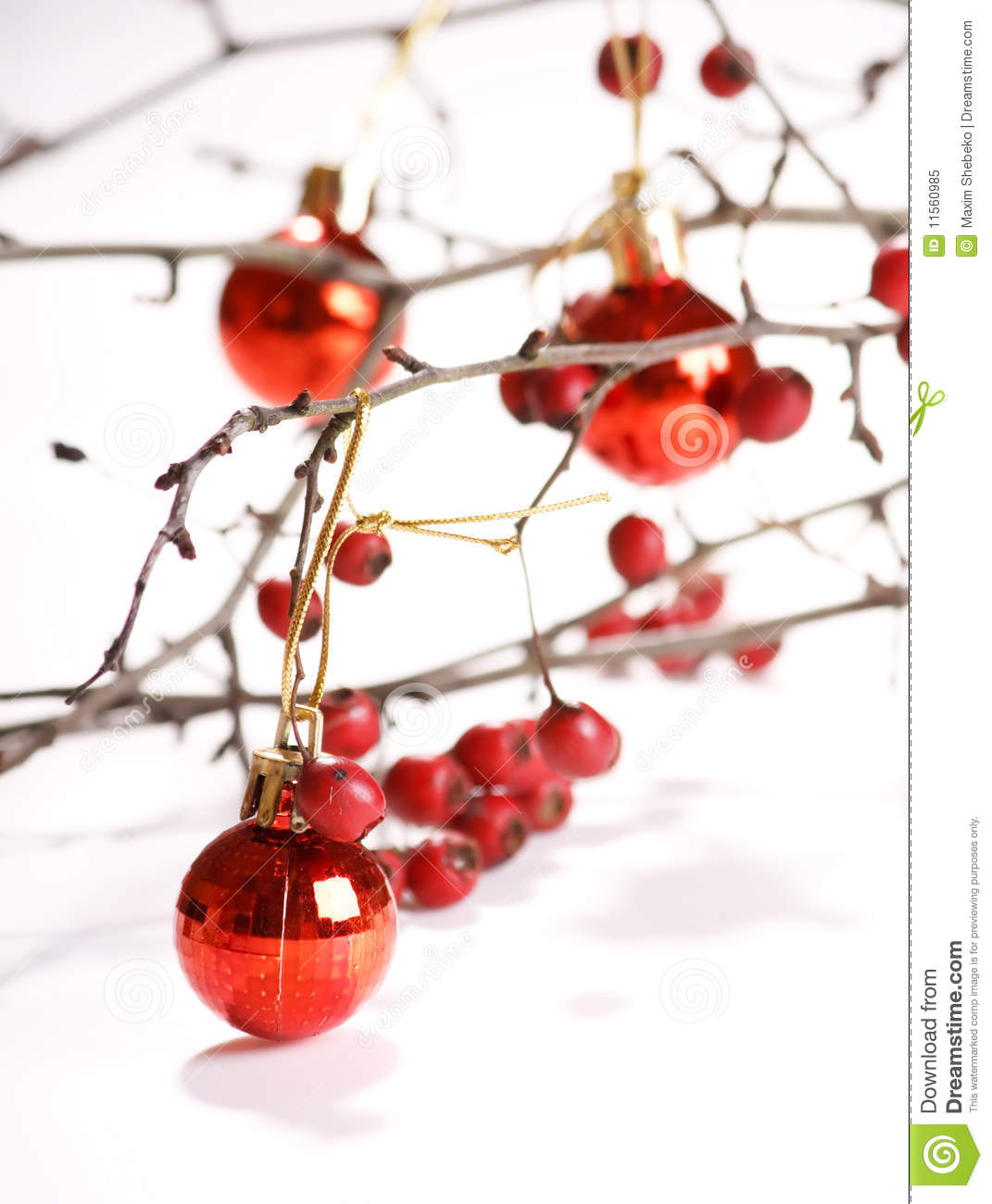 Winter Berries Royalty Free Stock Photo   Image  11560985