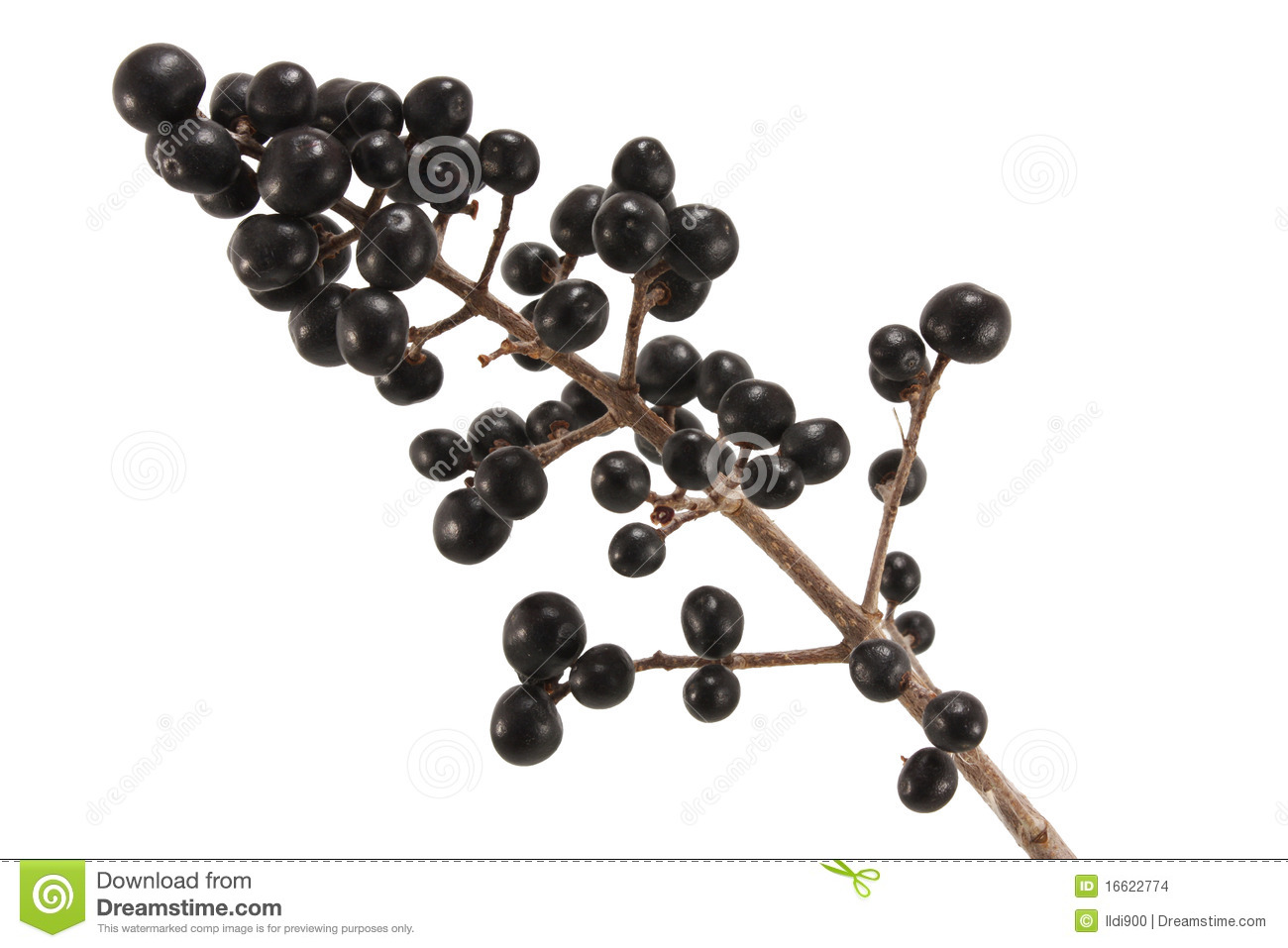 Winter Berries  Stock Images   Image  16622774