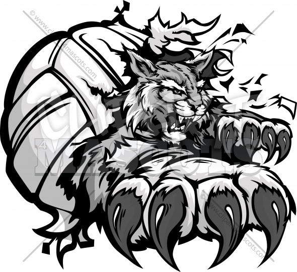 Wildcat Volleyball Clipart   Vector Mascot With Claws Tearing A