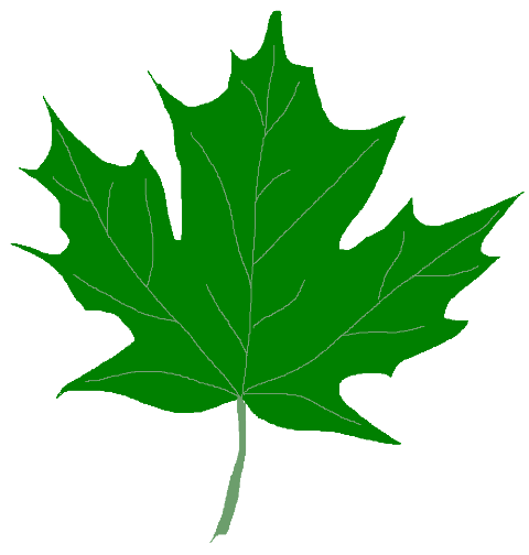 Green Maple Leaf Clipart   Clipart Panda   Free Clipart Images