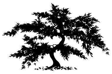 Japanese Maple Tree Clipart From Baystate Landscape   Design