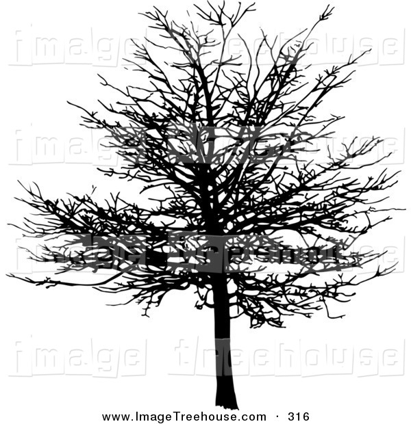 Maple Tree In Winter Time Tree Clip Art Kj Pargeter