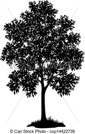 Maple Tree Black And White Clipart - Clipart Suggest